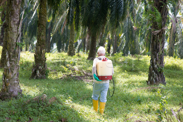 Palm oil and worker. Stock photo © szefei