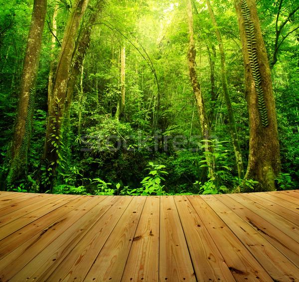 Rainforest tropikal Rainforest manzara Malezya Stok fotoğraf © szefei