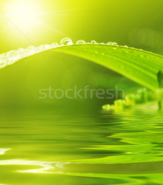 Stock photo: Dews on Green Leaf