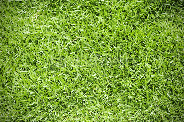 Green grass background  Stock photo © szefei