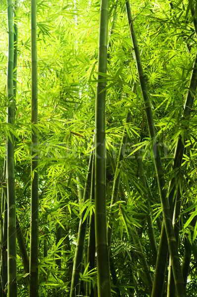 Bambù foresta asian mattina luce del sole albero Foto d'archivio © szefei