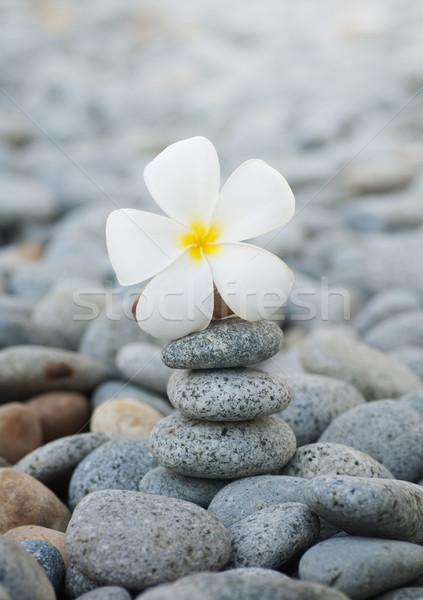 Fiori ciottoli ancora vita fiore natura sfondo Foto d'archivio © szefei