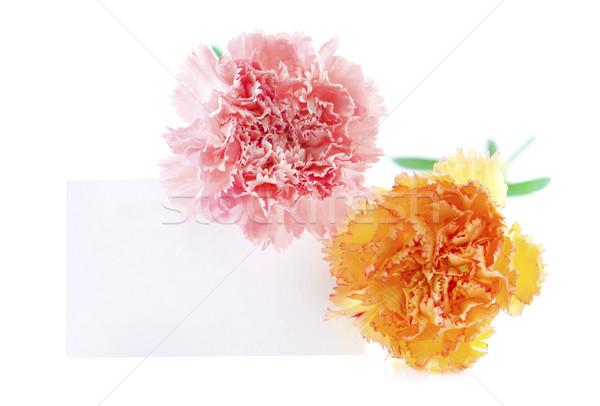 Tarjeta de regalo clavel flores blanco listo texto Foto stock © szefei
