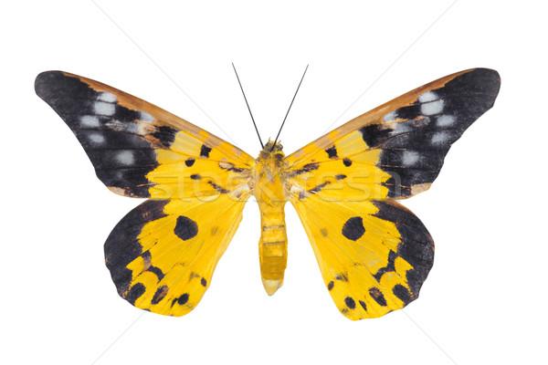 Day moth butterfly Stock photo © szefei