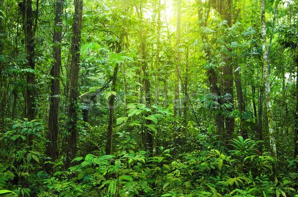 Denso floresta tropical manhã luz solar Foto stock © szefei