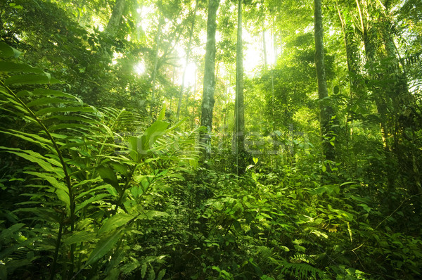 tropical rainforest landscape Stock photo © szefei