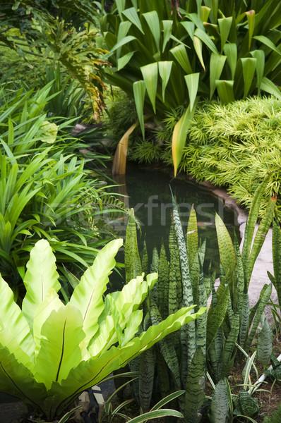 Tropische tuin vis vijver planten Stockfoto © szefei