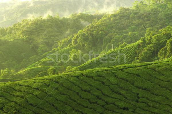 Chá plantação nascer do sol ver paisagem natureza Foto stock © szefei