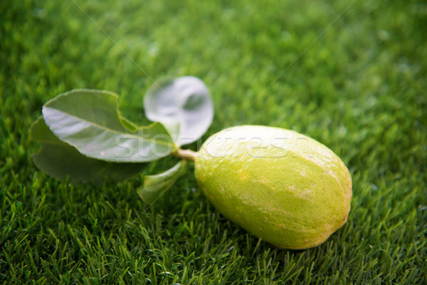 fresh organic lemon on lawn Stock photo © szefei