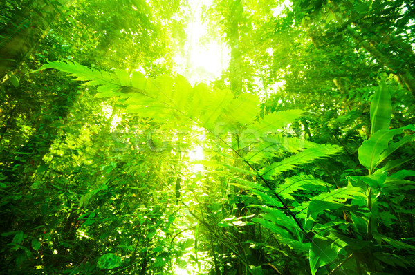 Natural tropical rainforest  Stock photo © szefei