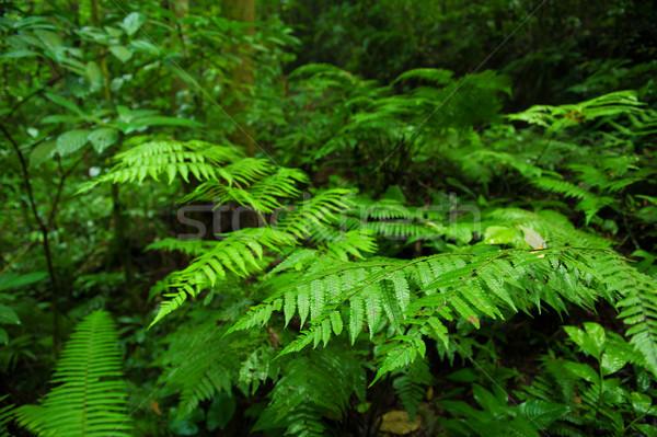 Bitkiler tropikal orman yeşil ağaç manzara Stok fotoğraf © szefei