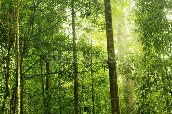 Green Forest. Stock photo © szefei