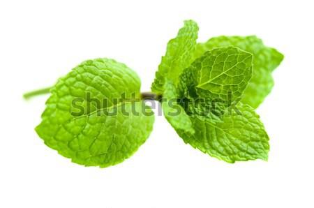 Green Mint Stock photo © szefei