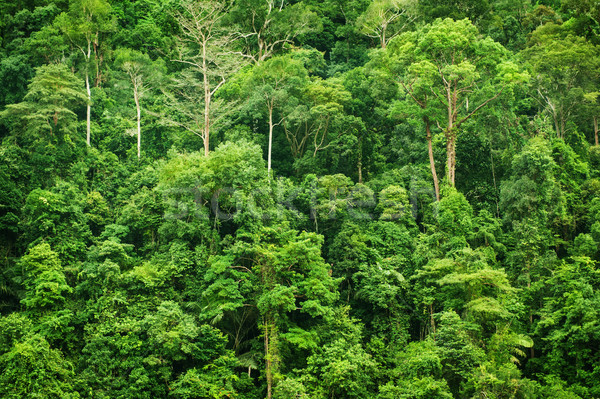 Tropical green forest landscape view Stock photo © szefei