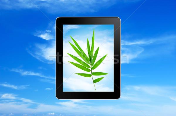 Planta crescente blue sky grama Foto stock © szefei