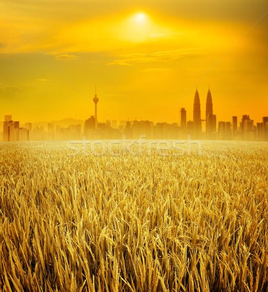Kuala Lumpur rijstveld Maleisië landschap Stockfoto © szefei