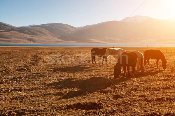 лошадей еды трава озеро красивой Восход Сток-фото © szefei