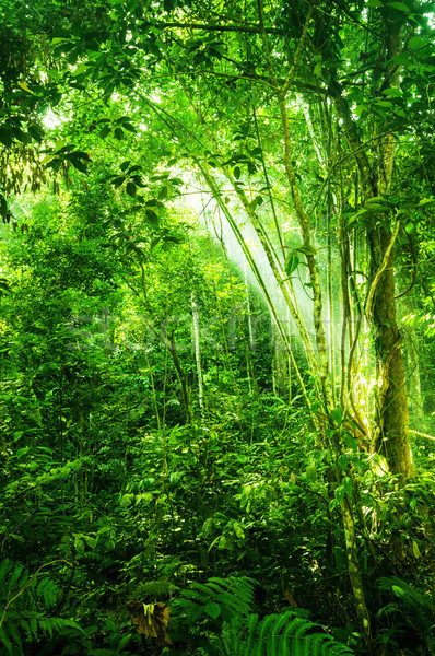 Natural tropical dense forest  Stock photo © szefei
