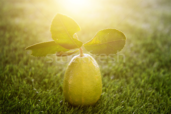 Chemical free lemon with sunlight Stock photo © szefei