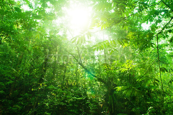 Tropical green forest view Stock photo © szefei