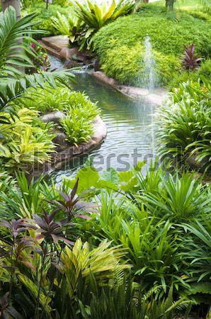 Tropical garden Stock photo © szefei