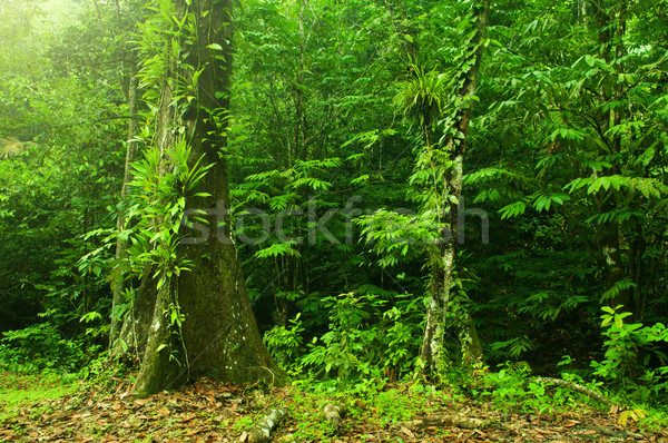 Tropical jungle landscape  Stock photo © szefei