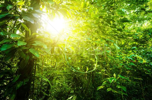 Natuurlijke tropische bos fantastisch dicht Stockfoto © szefei