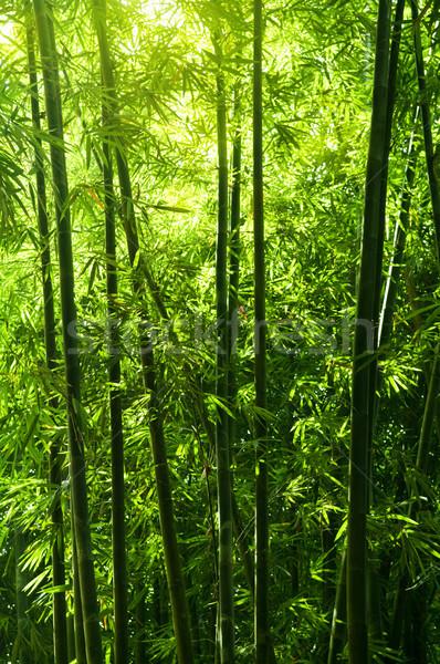 bamboo tree forest Stock photo © szefei