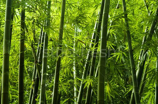 Asian bambù albero tropicali foresta pluviale Malaysia Foto d'archivio © szefei