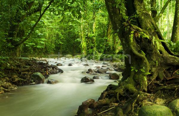 Tropicali foresta pluviale fiume Malaysia Asia acqua Foto d'archivio © szefei