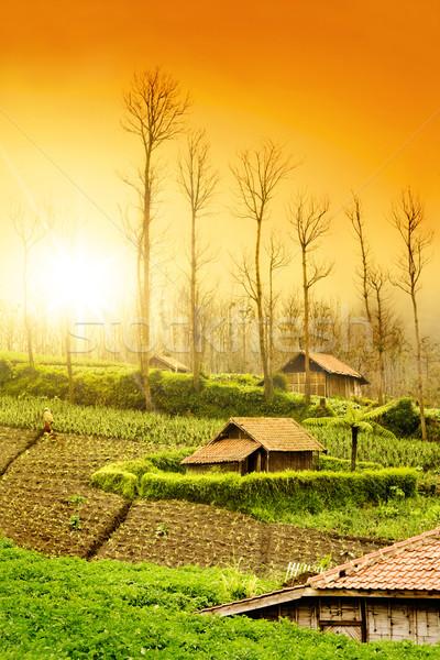 Farmland Sunrise Stock photo © szefei