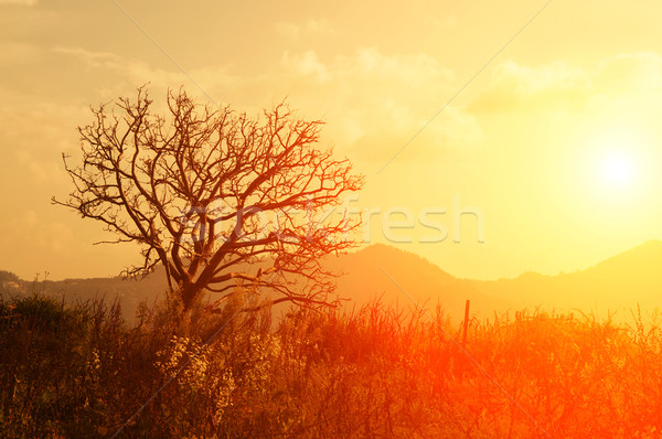 Silhouette of dying tree Stock photo © szefei