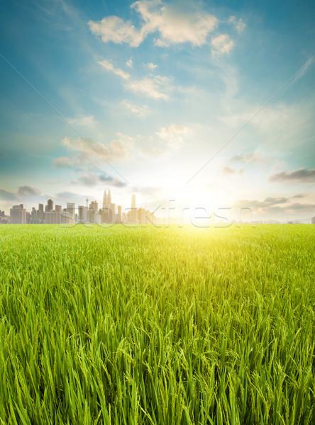 Kuala Lumpur tarım Malezya manzara gündoğumu Stok fotoğraf © szefei