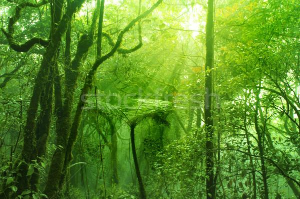 Lasu Malezja drzewo krajobraz górskich Zdjęcia stock © szefei