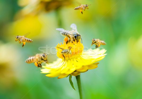 ストックフォト: グループ · ミツバチ · 花 · デイジーチェーン · 作業
