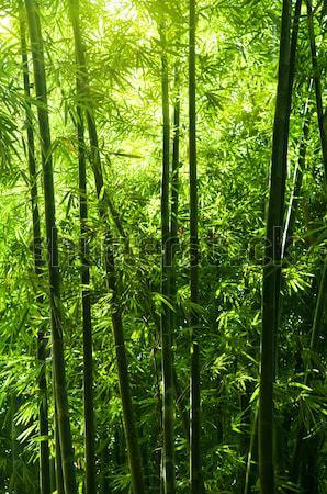 竹 森林 アジア 午前 日光 ツリー ストックフォト © szefei