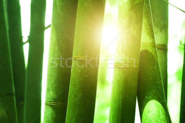 Close up on bamboo grove Stock photo © szefei