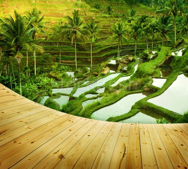 Terras rijst velden houten naast Stockfoto © szefei