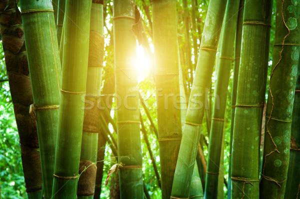 ázsiai bambusz erdő napfény tájkép gyönyörű Stock fotó © szefei