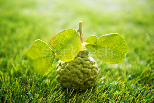 Organic kaffir lime on green lawn Stock photo © szefei