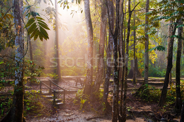 Beautiful tropical nature park Stock photo © szefei