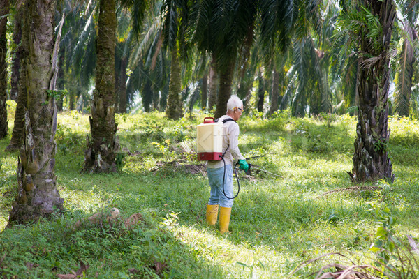 weeds poisoning in oil palm plantations Stock photo © szefei