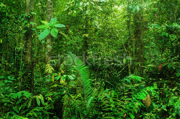 Fantastyczny tropikalnych Rainforest krajobraz rano drzewo Zdjęcia stock © szefei
