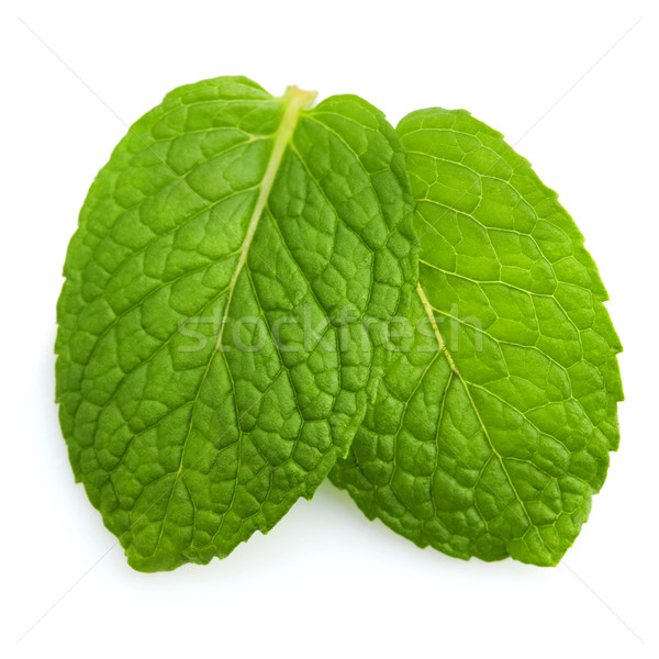 Mint leaves Stock photo © szefei