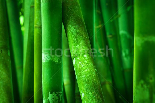 Bambù albero verde primavera Foto d'archivio © szefei