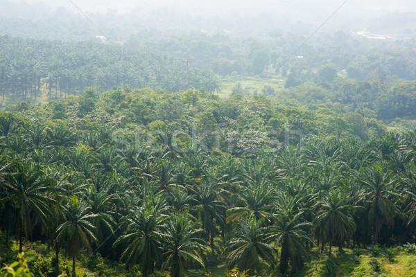 Palm oil tree Stock photo © szefei