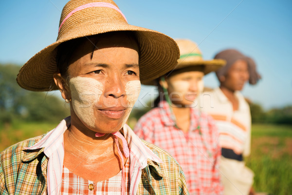 Myanmar farmer standing in row Stock photo © szefei