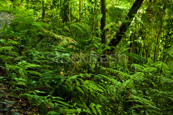 tropical green forest view. Stock photo © szefei