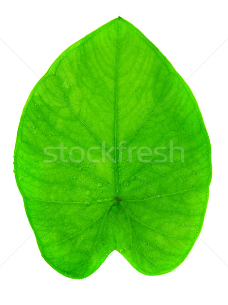 Yam leaf Stock photo © szefei