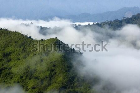 Top view. Stock photo © szefei
